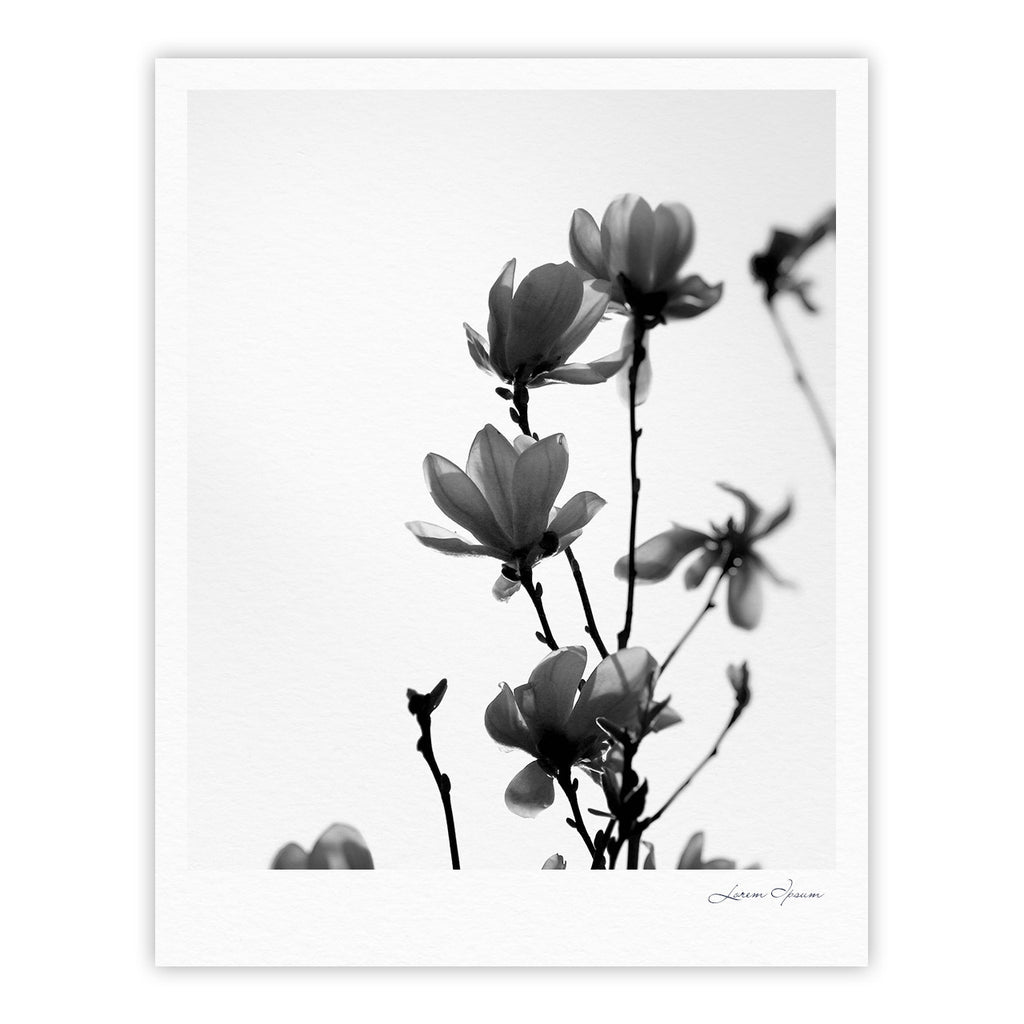 "Monika Strigel ""Mulan Magnolia"" White Gray Fine Art Gallery Print - KESS InHouse"