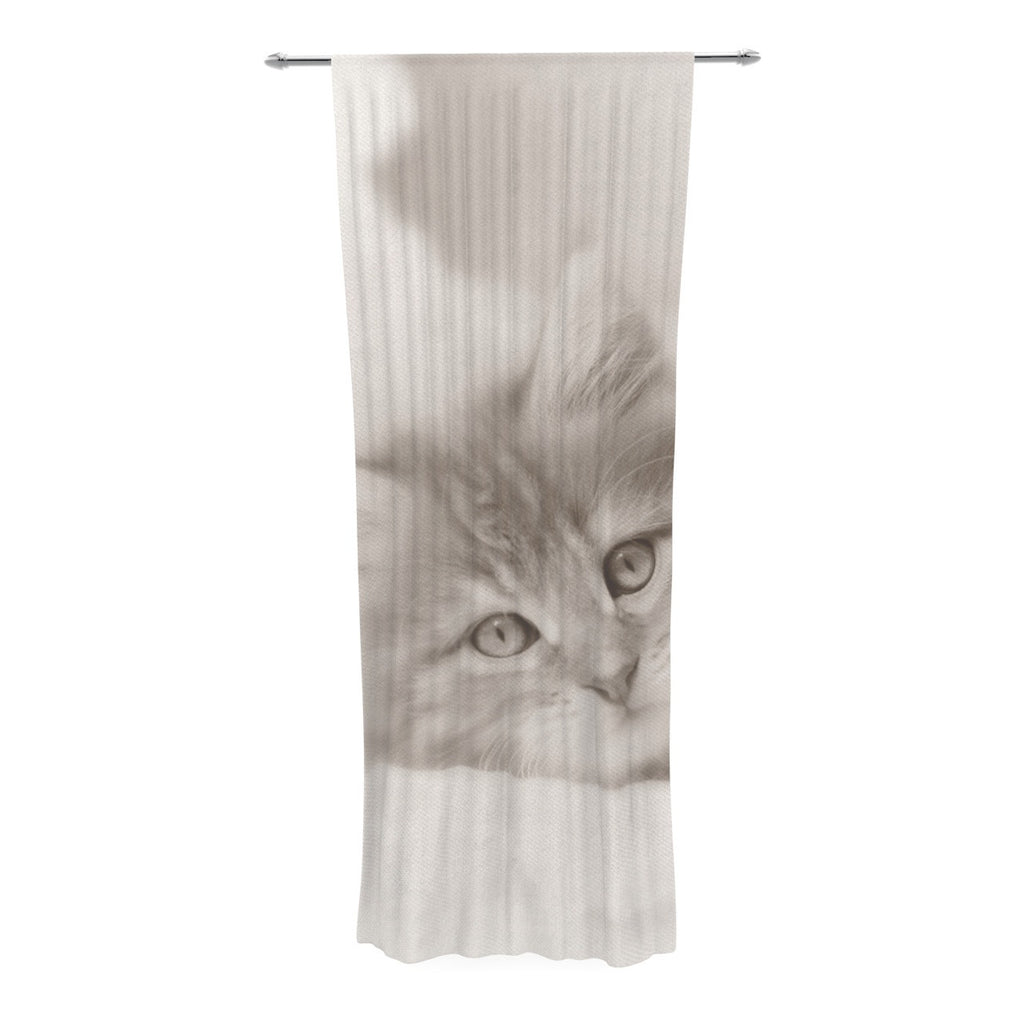 "Monika Strigel ""Main Coon Kitten"" Gray Cat Decorative Sheer Curtain - KESS InHouse  - 1"
