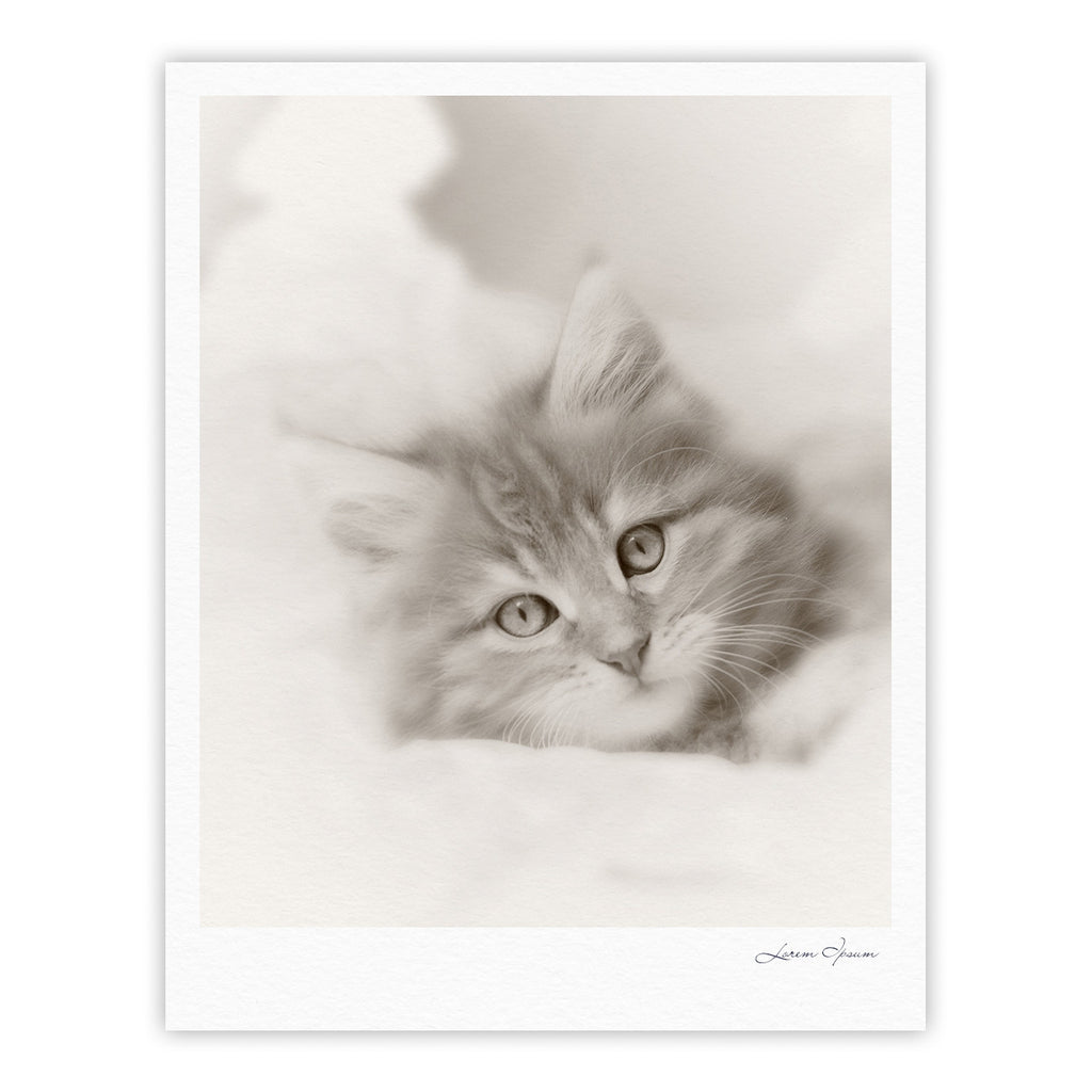 "Monika Strigel ""Main Coon Kitten"" Gray Cat Fine Art Gallery Print - KESS InHouse"