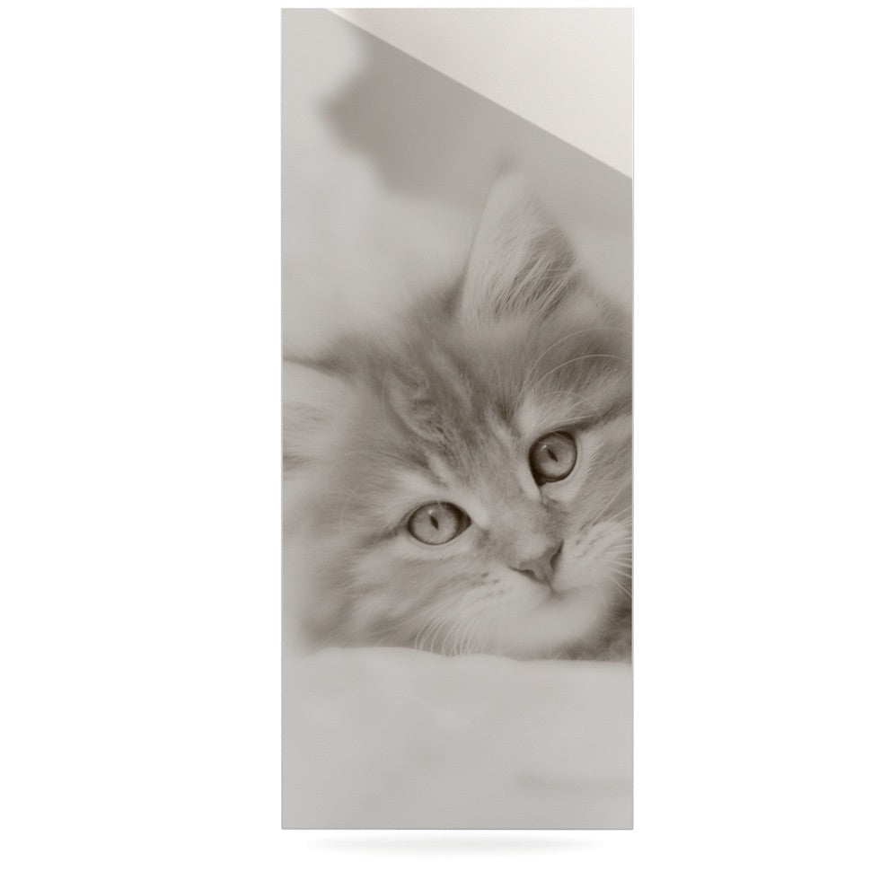 "Monika Strigel ""Main Coon Kitten"" Gray Cat Luxe Rectangle Panel - KESS InHouse  - 1"