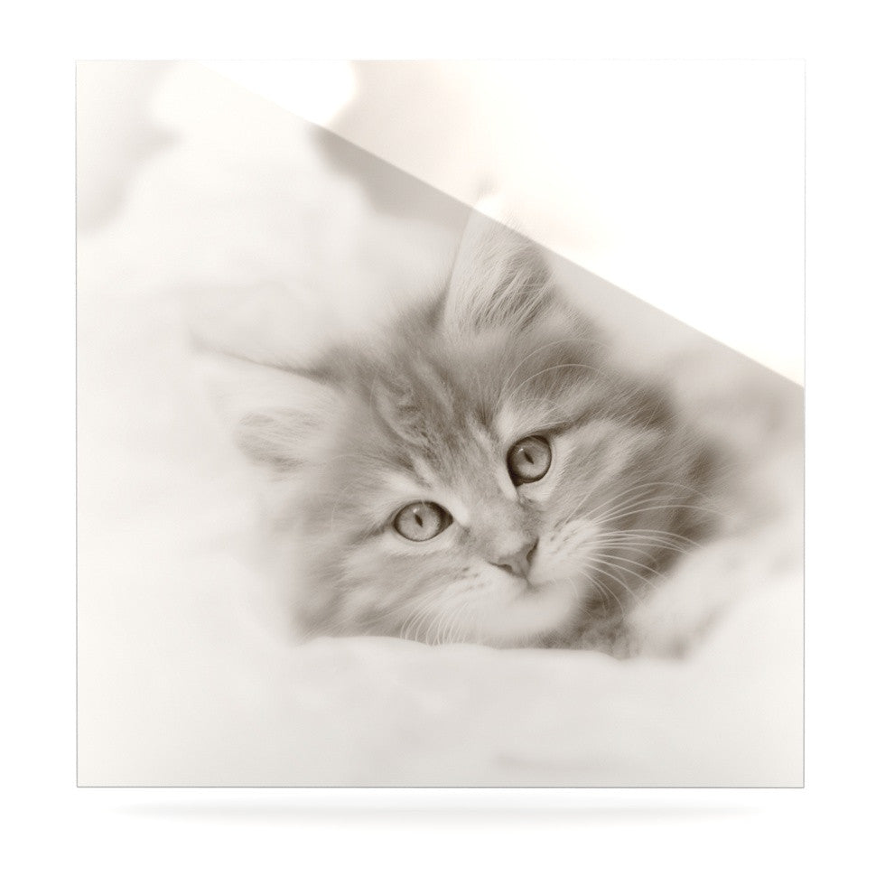 "Monika Strigel ""Main Coon Kitten"" Gray Cat Luxe Square Panel - KESS InHouse  - 1"