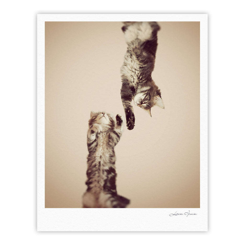 "Monika Strigel ""Upside Down"" Brown Cats Fine Art Gallery Print - KESS InHouse"