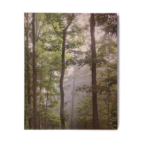"Rosie Brown ""Morning Fog"" Green Gray Photography Birchwood Wall Art"