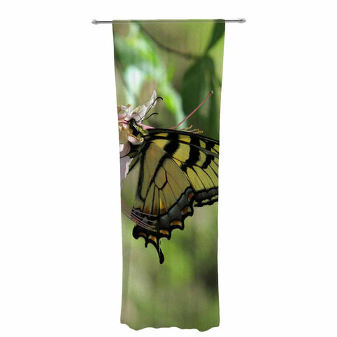 "Rosie Brown ""Gibbs Garden Butterfly"" Green Yellow Photography Decorative Sheer Curtain"