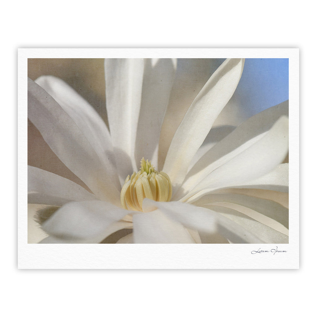 "Robin Dickinson ""First Signs"" White Floral Fine Art Gallery Print - KESS InHouse"