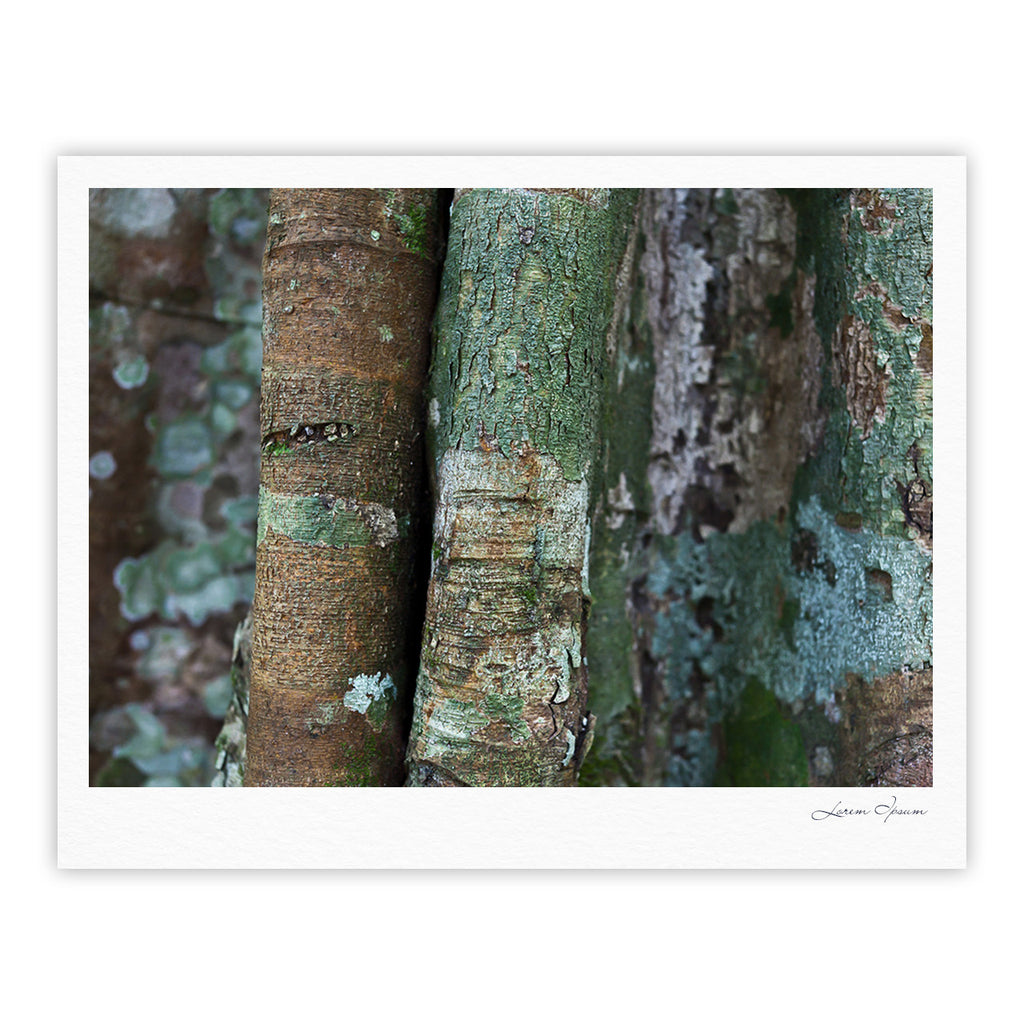 "Susan Sanders ""Into the Woods"" Brown Rustic Fine Art Gallery Print - KESS InHouse"