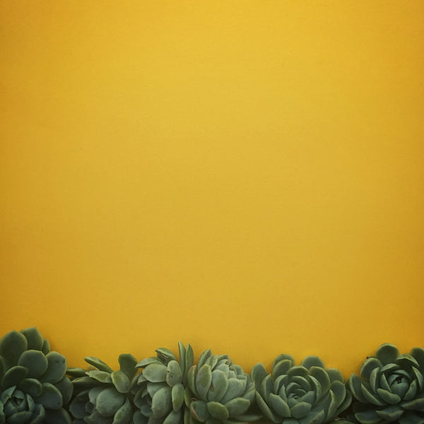 Succulents in Orange