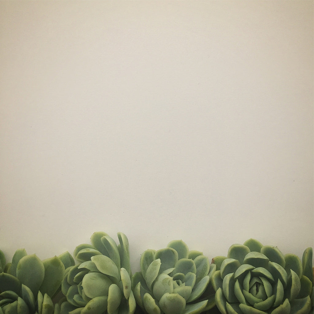 Succulents in Grey