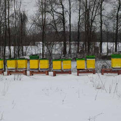 winterized beehives in the snow