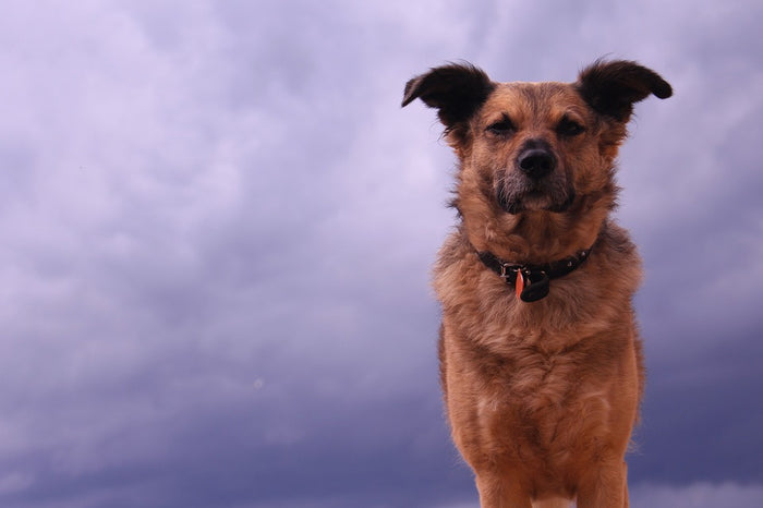 Tips to Help Calm Your Pets During Storms