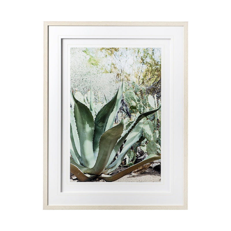 Alzira Aloe Framed Art
