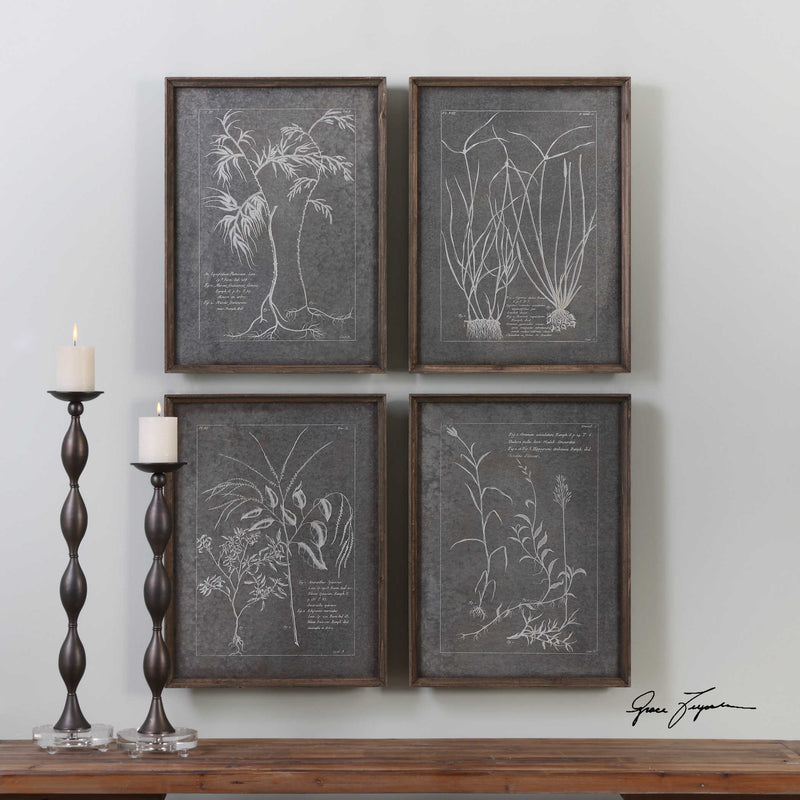 Root Study Framed Set