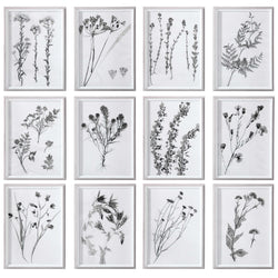 Black & White Botanical Print