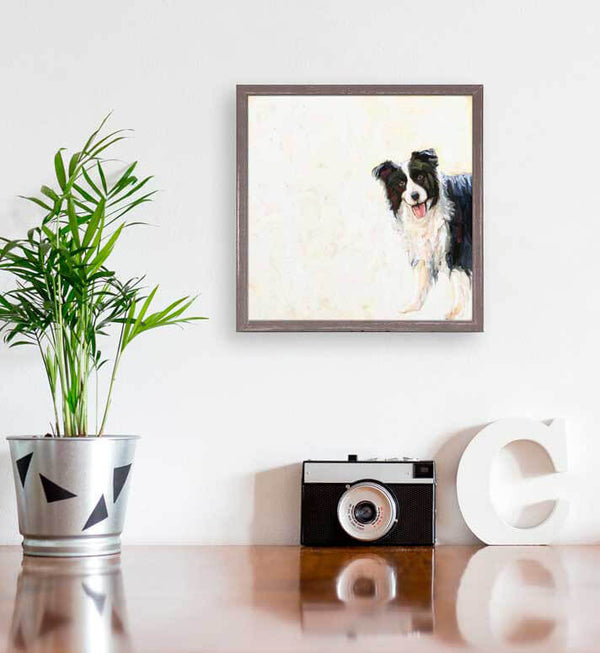 Peeking Border Collie Mini Canvas