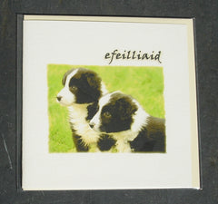 New baby card 'Efeilliaid' Twin puppies