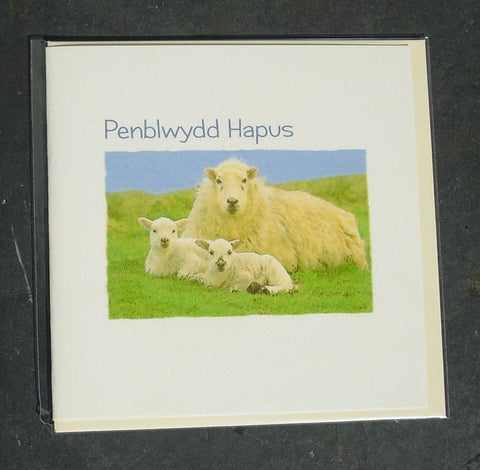 Birthday card 'Penblwydd Hapus' Sheep & Lambs