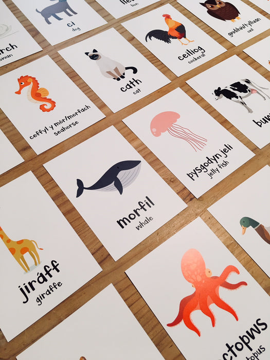 Welsh Animal Flash Cards