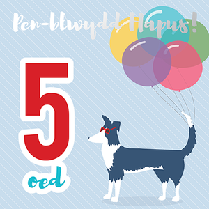 Birthday card 'Pen-blwydd hapus 5' sheep dog