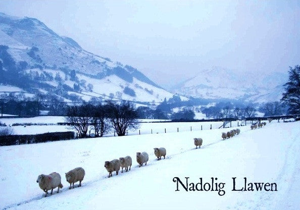 Christmas card 'Nadolig Llawen' sheep