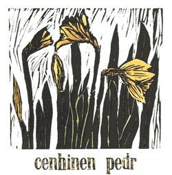 St David's Day card 'Cenhinen Pedr' daffodil