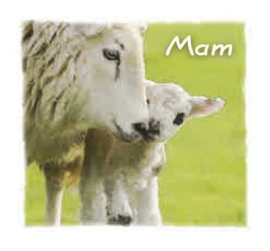 Mothers' day card 'Mam' sheep & lamb