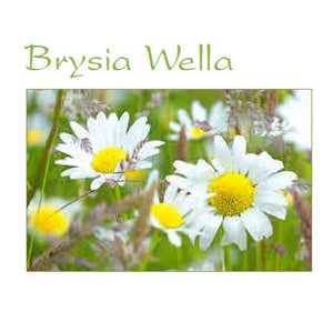 Get well soon card 'Brysia Wella' daisies