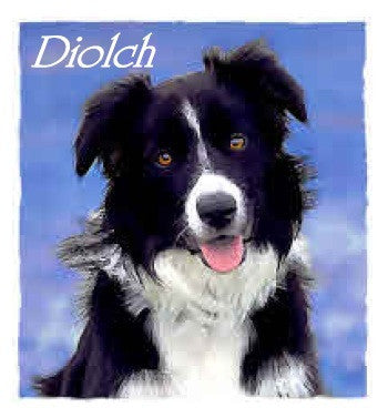 Thank you card 'Diolch' Dog