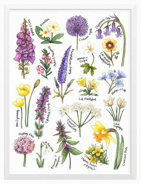 Welsh Wildflowers Print