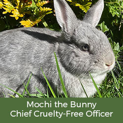 Nourish Organic Chief Cruelty Free Officer – Mochi the Bunny (yes, he's real!)