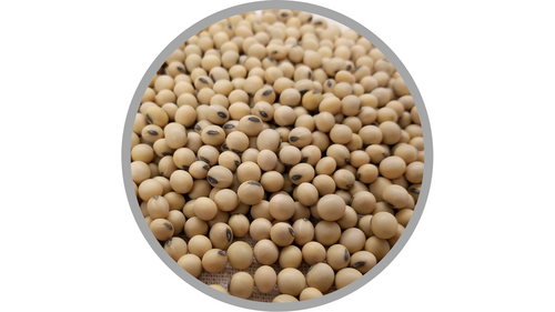 Certified Organic Soy Lecithin