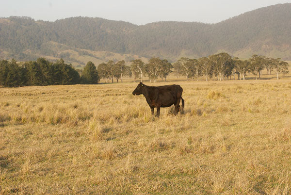 Barrington Tops NSW photo by Saffron Craig