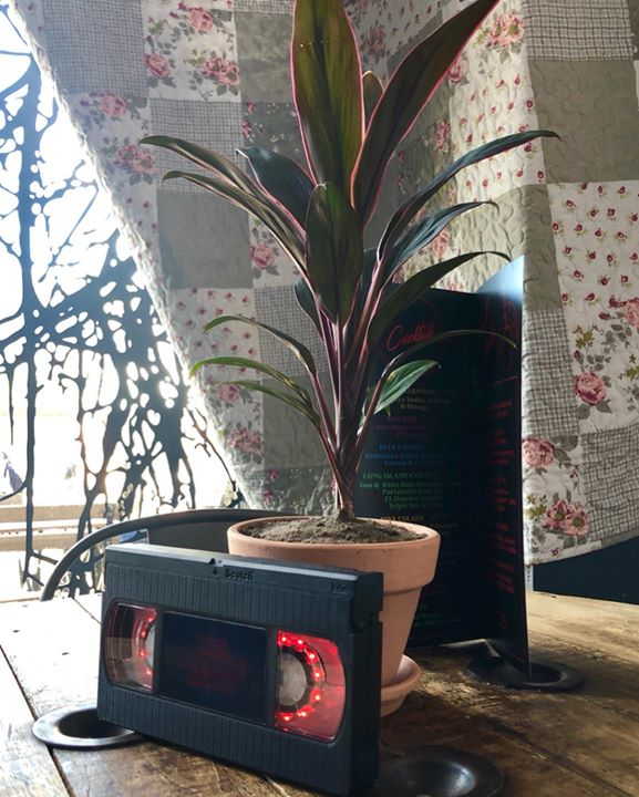 image showing Houseplant-Tree-Plant-Leaf-Technology-Flowerpot-Electronic device-Flower-Furniture-35514-85719