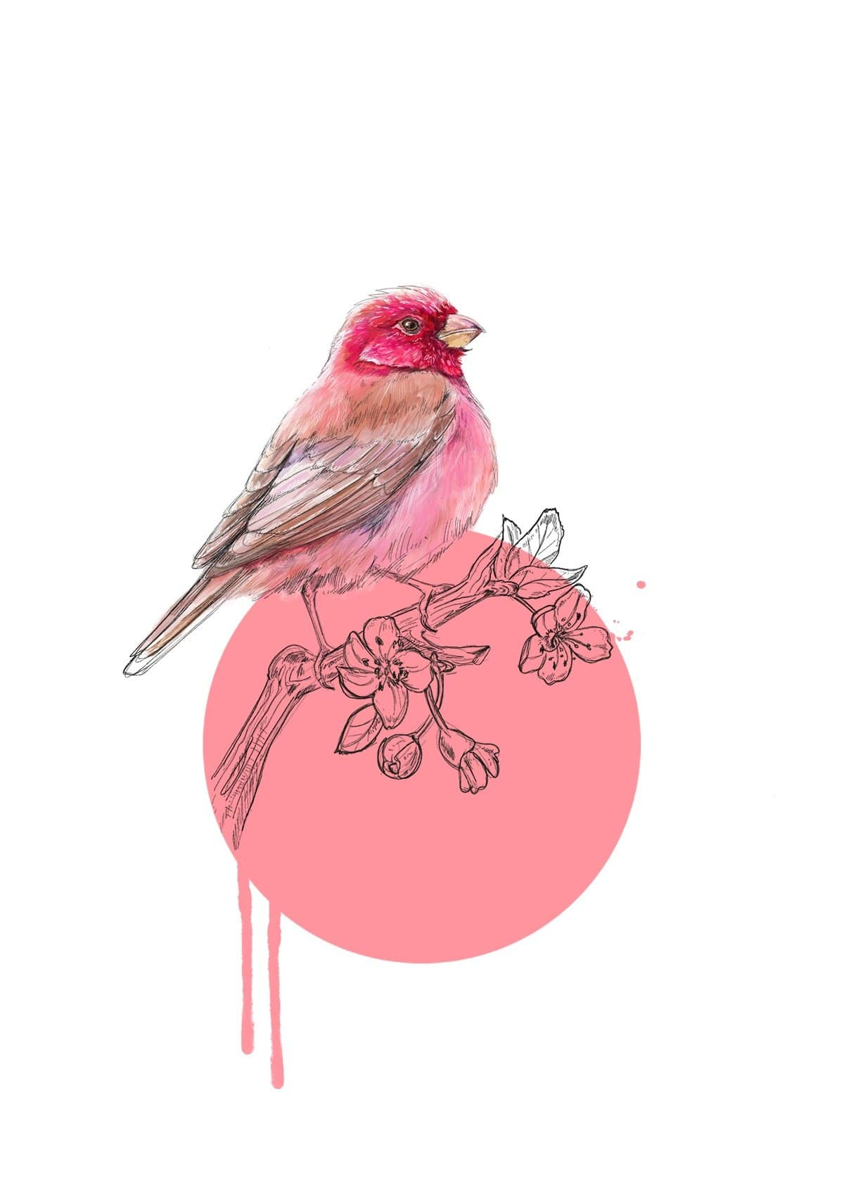 Rose Finch Giclée Art Print