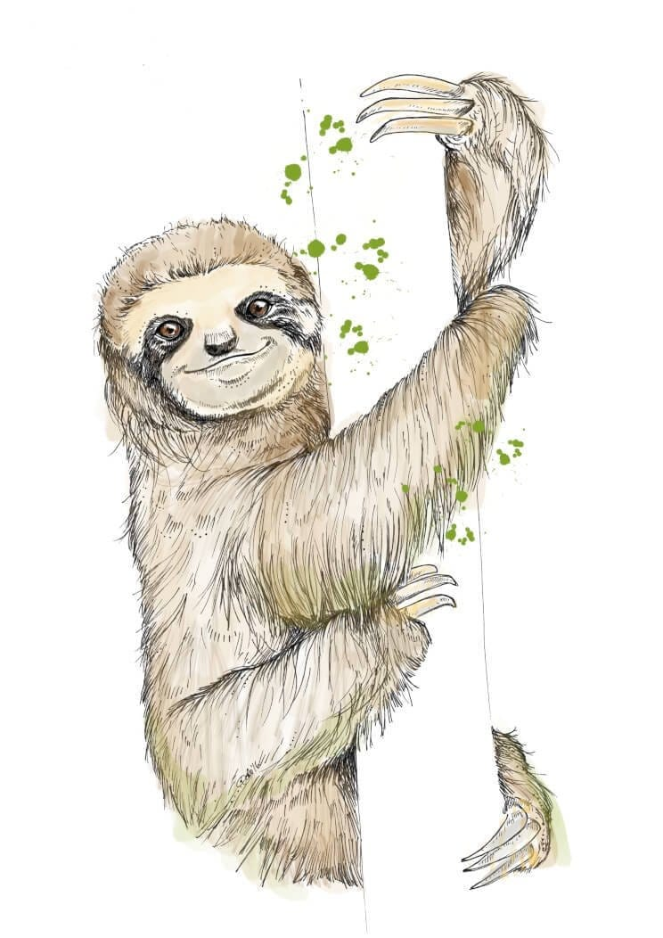 This image contains Sloth,Three-toed sloth,Two-toed sloth,Drawing,Sketch,Illustration