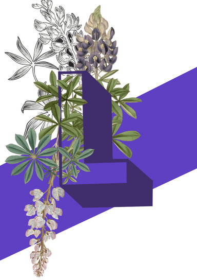 This image contains Lilac,Lavender,Flower,Purple,Plant,Violet