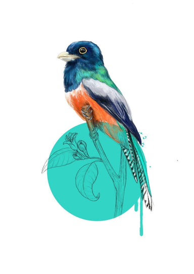 Blue Crowned Trogon Giclée Art Print