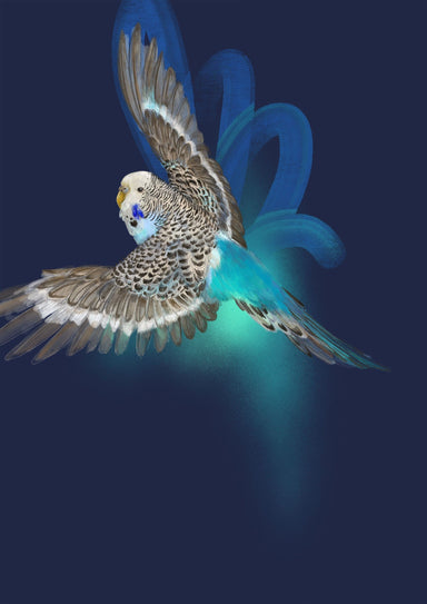 Budgerigar's Midnight Adventure