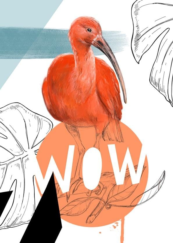 Scarlet Ibis - Wow Greeting Card