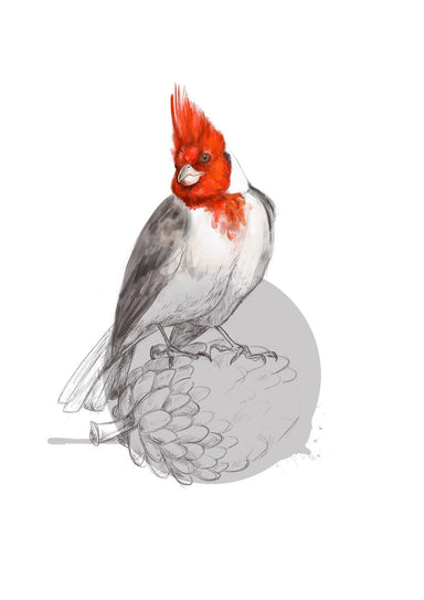 Red Crested Cardinal Giclée Art Print