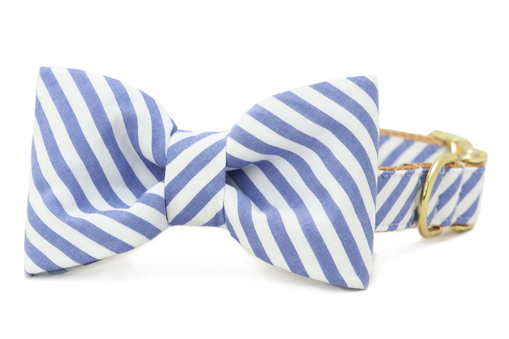 Blue Stripe on Gold Bow Tie Dog Collar