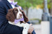 Wisteria Bow Tie Dog Collar