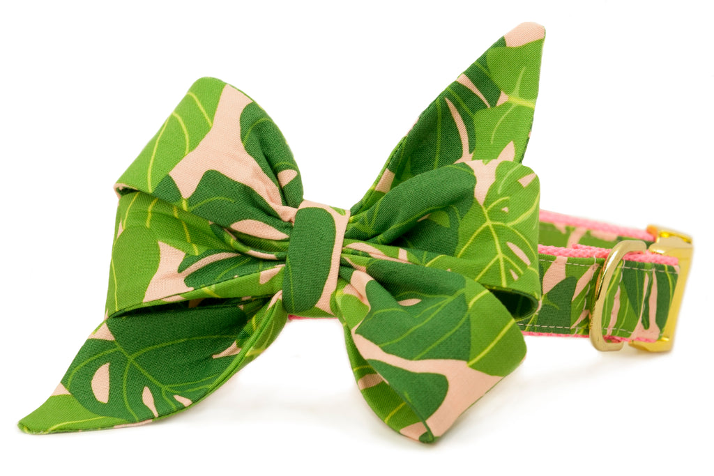 SALE BELLE BOW COLLAR - Palm Springs