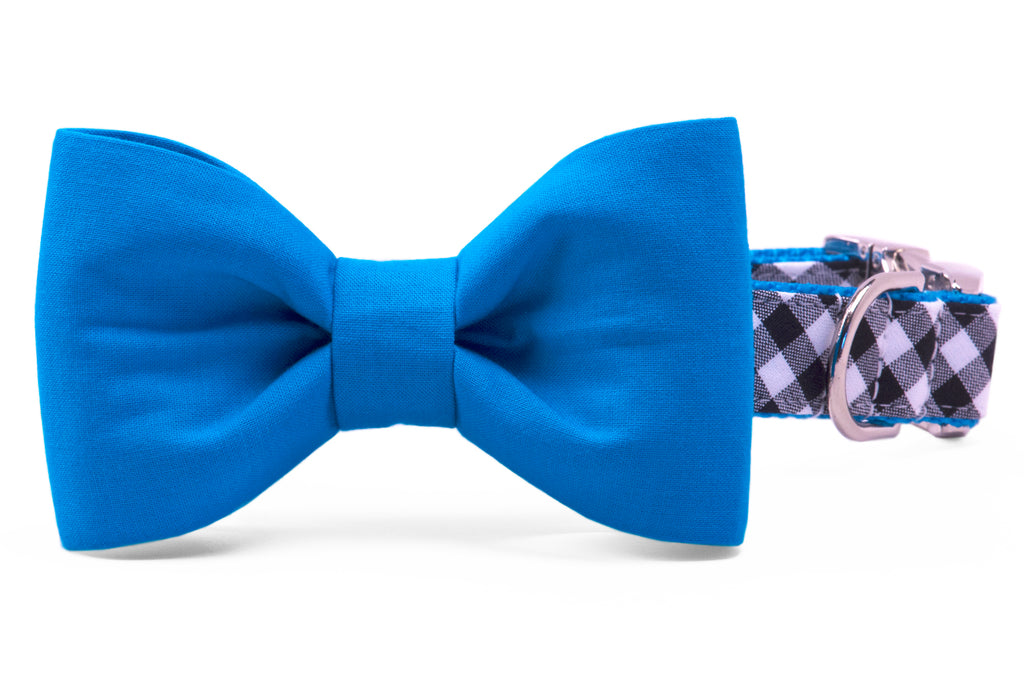 Panthers Blue on Black Check Bow Tie Dog Collar