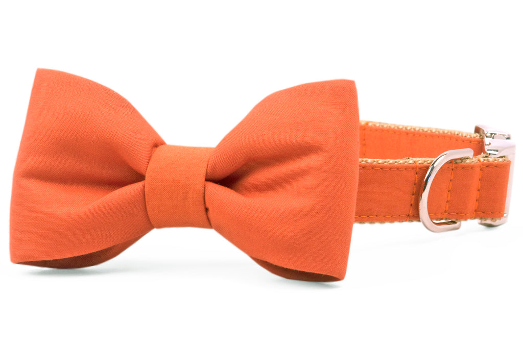 Burnt Orange Bow Tie Dog Collar