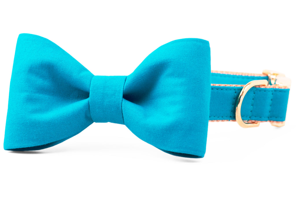 Caribbean Bow Tie Dog Collar