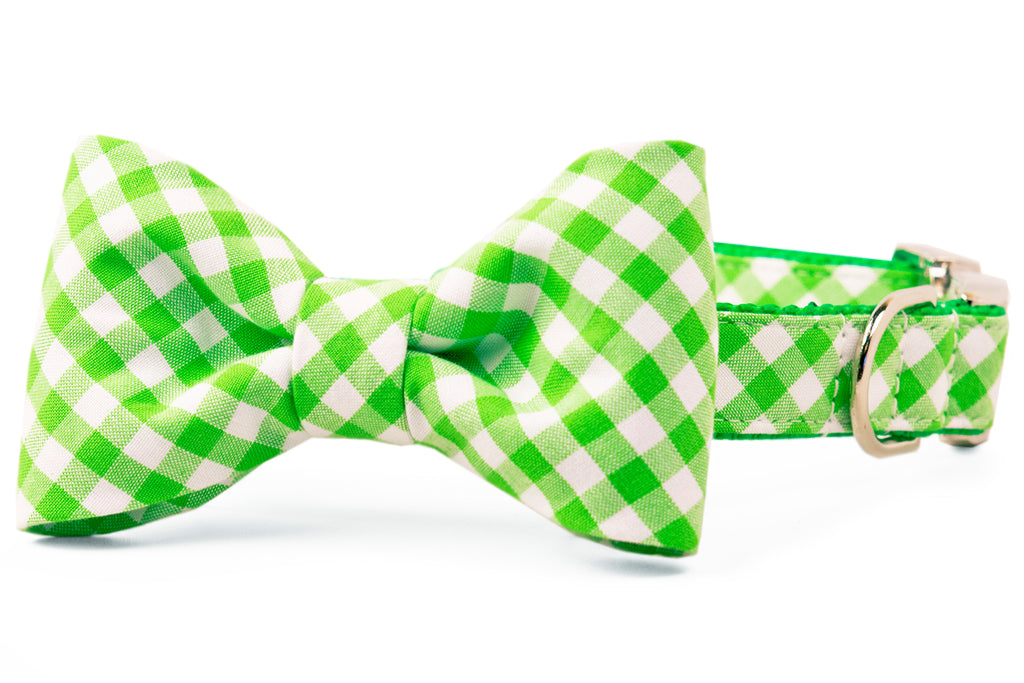 Key Lime Bow Tie Dog Collar