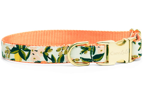 Sweet Clementines Dog Collar