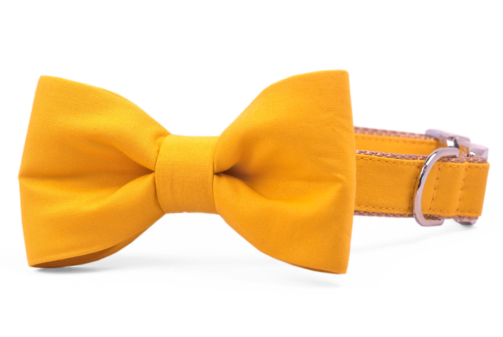 Mustard Bow Tie Dog Collar