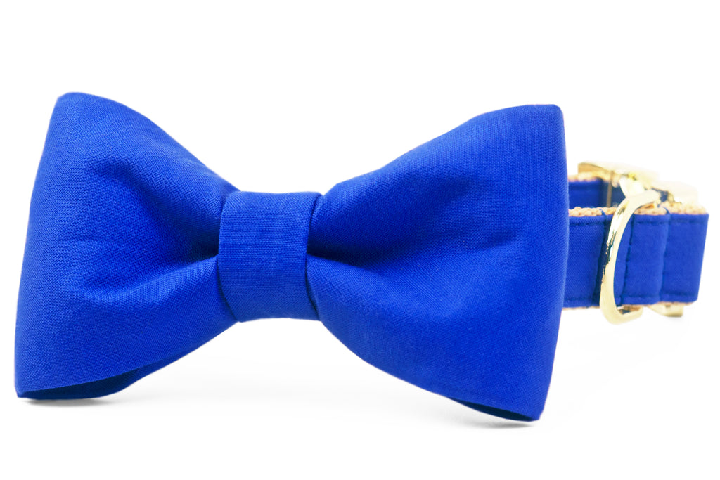 Royal Blue Bow Tie Dog Collar