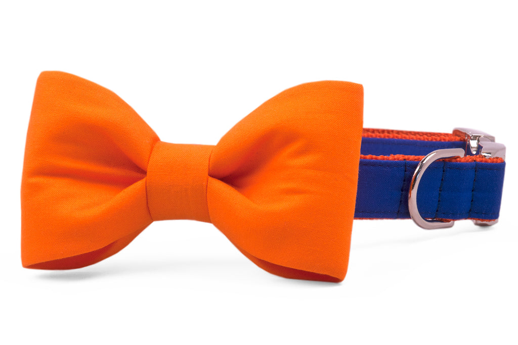 Florida Orange on Royal Blue Bow Tie Dog Collar